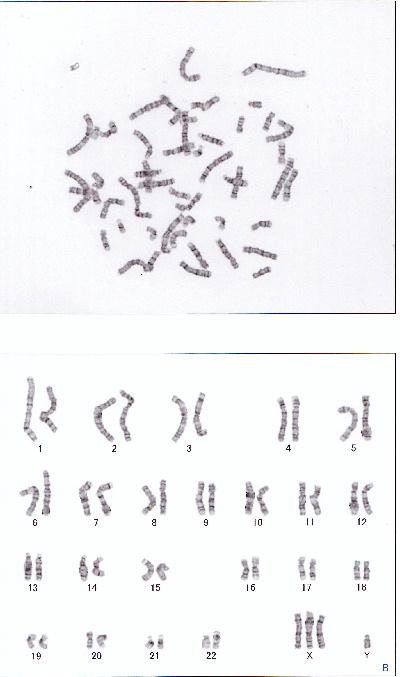 DNA01.jpg