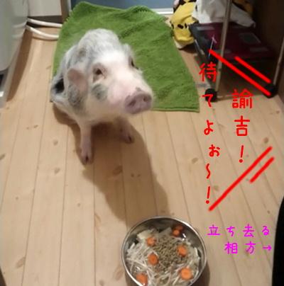 yukichi_mate2.jpg