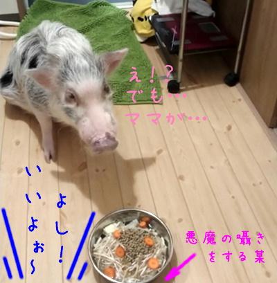 yukichi_mate3.jpg