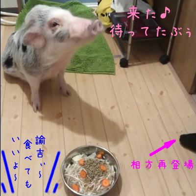 yukichi_mate4.jpg