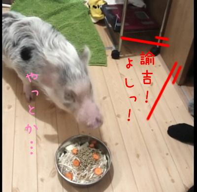 yukichi_mate5.jpg